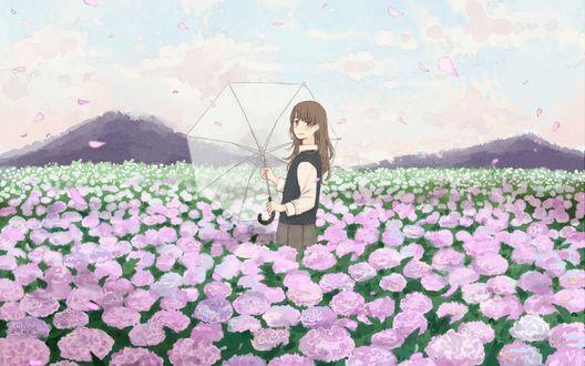 Обои Девушка с прозрачным зонтиком в руках стоит среди цветущей гортензии