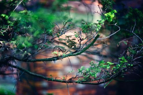 Обои Веточка дерева с первыми зелеными листиками, by Versatis