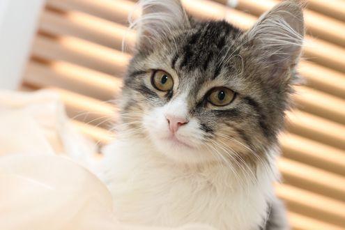 Обои Мордочка милого кота