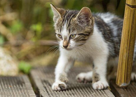 Обои Только что проснувшийся котенок гуляет
