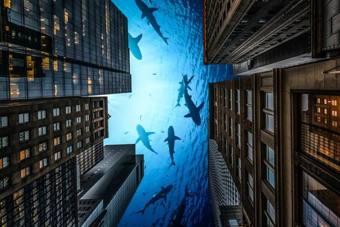 Обои Высотные дома, вместо неба вода, в которой плавают акулы
