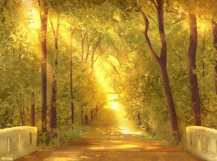 Обои Лучи солнца проникают сквозь листву и делают лес золотым, by CZY