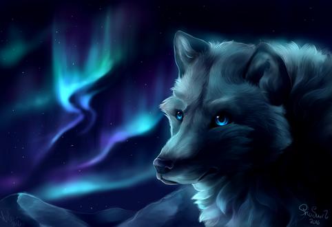 Обои Волк на фоне северного сияния, by SnoSwirl