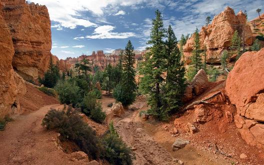 Обои Хвойные деревья в горах национального парка Брайс-Каньон, штат Юта, США / Bryce Canyon National Park, Utah, USA
