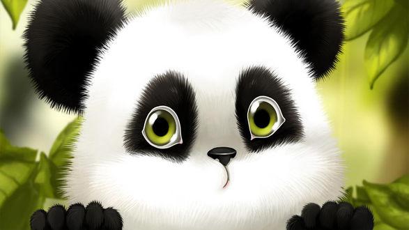 Обои Милая большеглазая панда