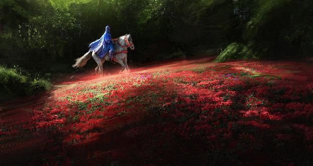 Обои Мужчина в голубом одеянии верхом на белой лошади скачет по цветочному полю, by Thuberchs