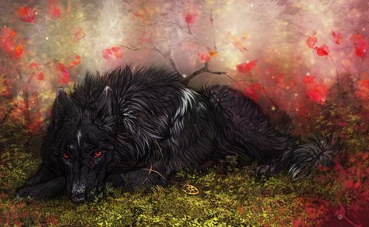 Обои Волк с медальоном на шее лежит в траве. by Sharaiza