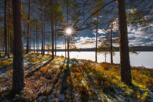 Обои Яркое солнце освещает лес, фотограф Ole Henrik Skjelstad