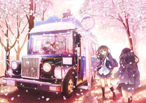 Обои Две школьницы бегут к автобусу, стоящему у знака среди цветущих деревьев сакуры, за рулем которого сидит кролик в форме шофера, рядом стоит медведь в галстуке, а на крыше потягивается кошка, art by Furai