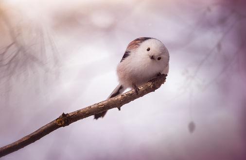 Обои Птичка сидит на ветке, фотограф Дмитрий Посевич