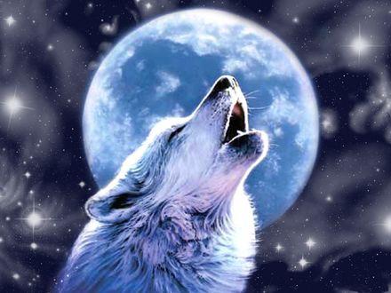 Обои Воющий волк на фоне луны и космоса
