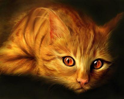 Обои Милый рыжий кот на темном фоне