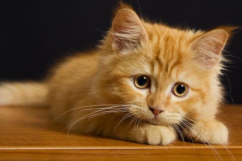 Обои Грустный рыжий котенок