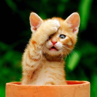 Обои Милый маленький рыжий котенок положил лапку на мордочку