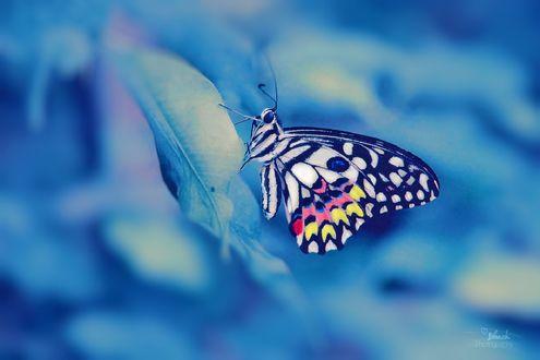 Обои Бабочка на листике, by Blanchii