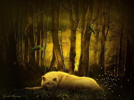 Обои Белый волк лежит в лесу, на ветках деревьев сидят попугаи, by apanyadong