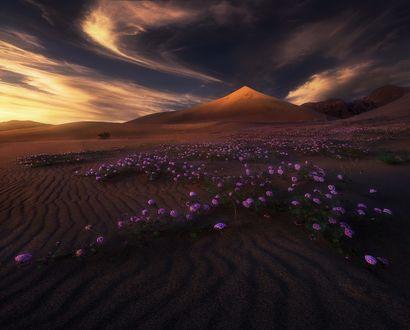 Обои Весенние цветы в долине перед горой, фотограф Marc Adamus
