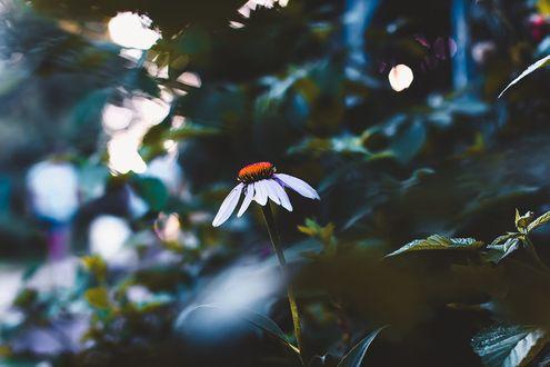Обои Цветы на размытом фоне, фотограф Kristina Manchenko