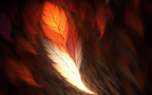 Обои Фрактальные перья теплых тонов