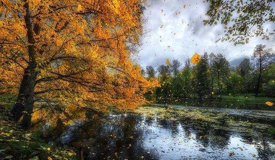 Обои Осенний танец листопада на фоне природы, by GaL-Lina