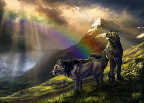 Обои Два волка в горах, в небе радуга