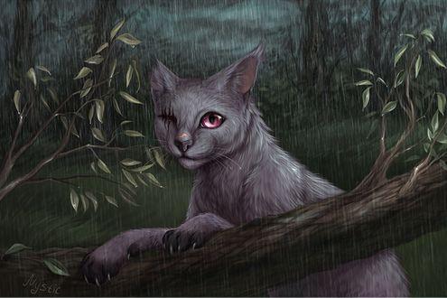 Обои Одноглазый кот в лесу под дождем (Mystic)