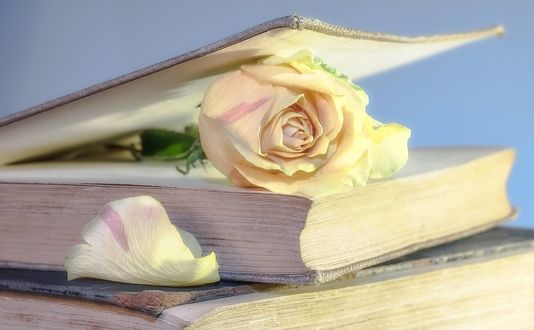 Обои Кремовая роза в книге