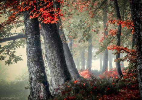 Обои Деревья в легкой утренней дымке, фотограф Patrice Thomas