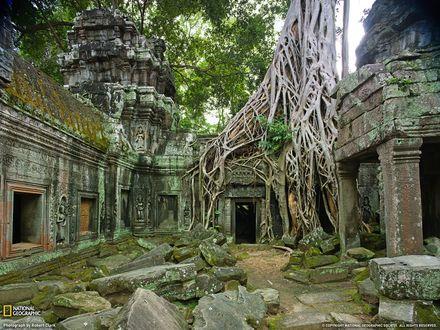 Обои Храм Та-Прохм в храмовном комплексе Ангкор, поглощенный джунглями, город Сием Рип, Камбоджа