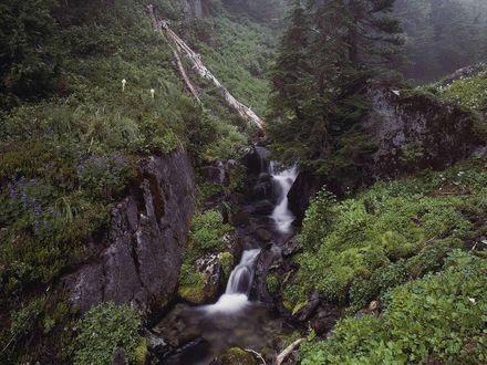 Обои Горная река с порогами в ущелье, поросшем лесом