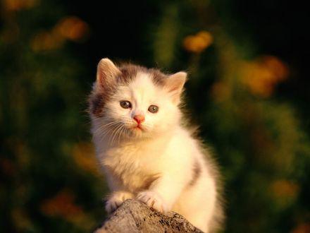 Обои Маленький милый котенок сидит на камне, на размытом фоне