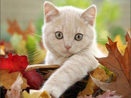 Обои Милый котенек в осенней листве