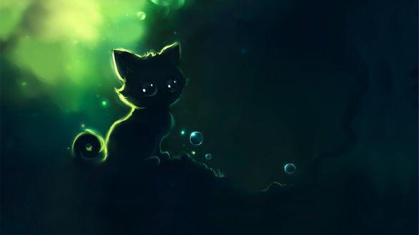 Обои Большеглазый котенок и пузырьки
