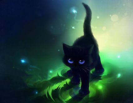 Обои Черный кот с сиреневыми глазами стоит в воде