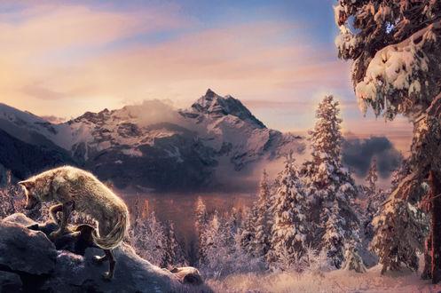 Обои Волк поднимается на гору, by Amphispiza