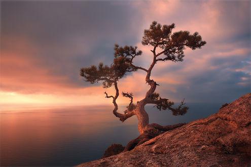 Обои Одинокое дерево на фоне облачного неба, фотограф Михалюк Сергей