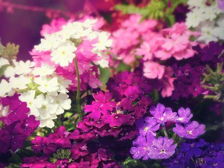 Обои Много красивых цветов