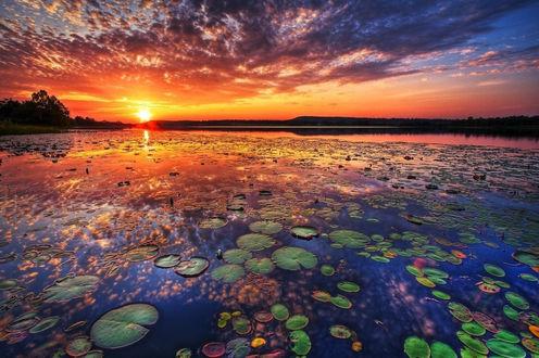 Обои Яркое красивое небо во время заката над рекой с лилиями и природой на берегу, ву Тodd Tobe