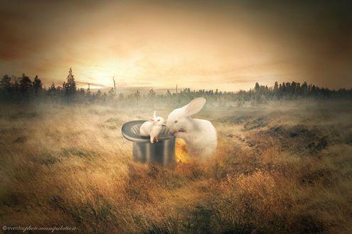 Обои Крольчиха и крольчонок в шляпе, by evenliu