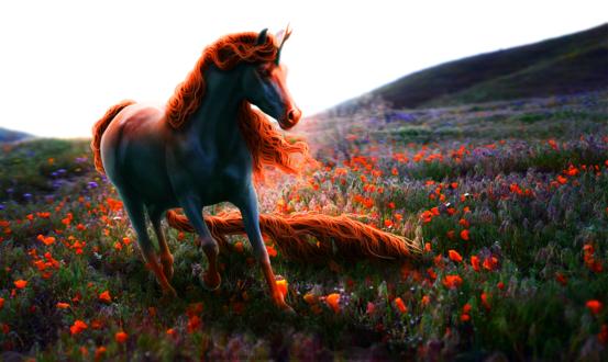 Обои Красивая лошадь на цветочном поле, by jasmine-autumn