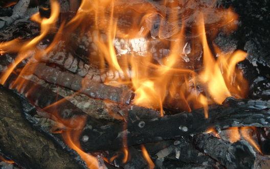 Обои Горящий костер, огонь жадно лижет березовые поленья