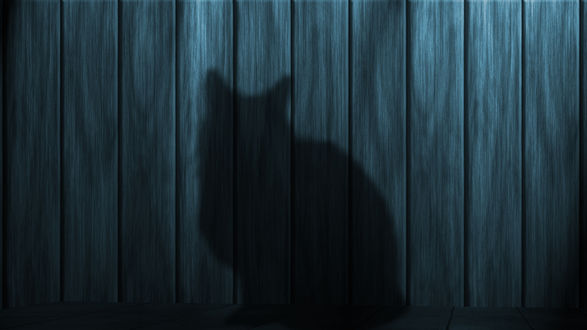 Обои Черный силуэт кота на фоне темно-серого забора
