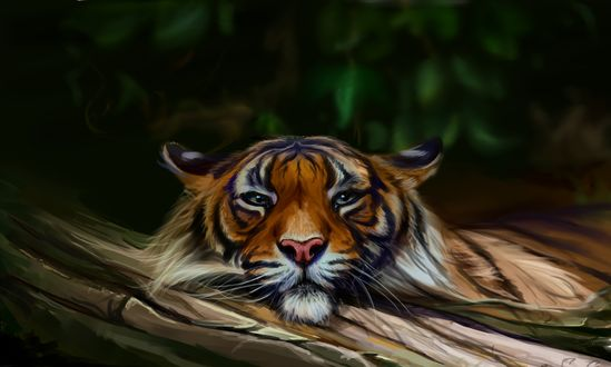Обои Тигр на фоне природы, by SalamanDra-S