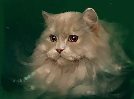 Обои Пушистый кот на зеленом фоне, by SalamanDra-S