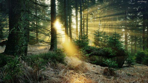 Обои Солнечные лучи освещают лес, фотограф Kilian Schоnberger