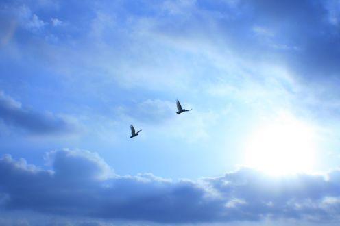 Обои Птицы в небе над облаками