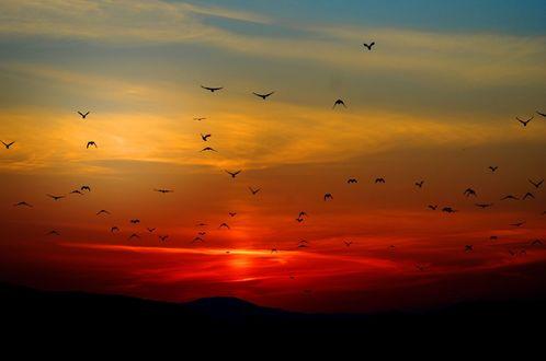 Обои Летящие птицы на фоне красивого неба на закате дня