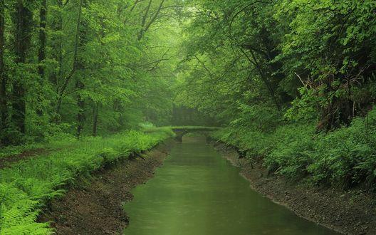 Обои Каменный мостик через речку, поросший травой в густом зеленом лесу
