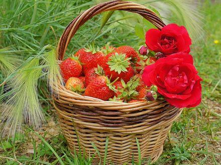 Обои Корзинка со спелой клубникой и розами на траве