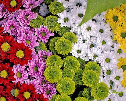 Обои Разноцветные цветы крупным планом